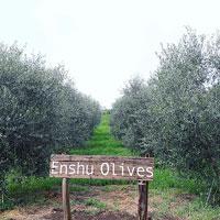 enshu olives